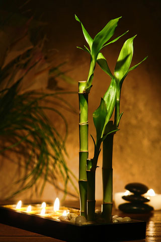 http://www.dreamstime.com/royalty-free-stock-image-zen-meditation-candles-bamboo-plants-image17013546